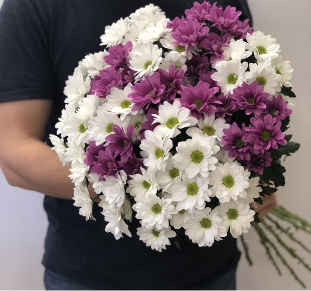 Букет из 15 белых и фиолетовых хризантем