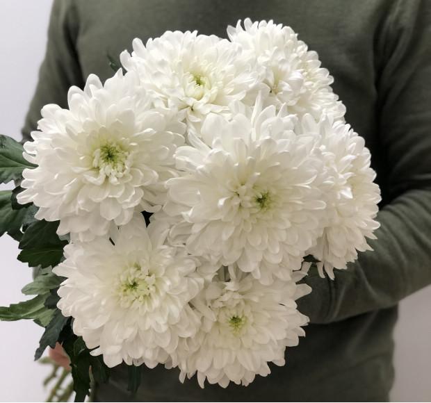 Букет 7 Белых хризантем