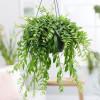 Декоративно лиственные
